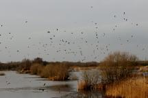 Avalon marshes (2)